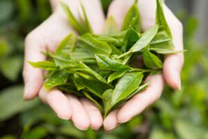 緑茶メーカー